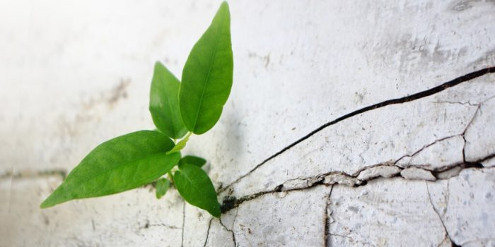 green plant growing from cracks in concrete trauma dissociation