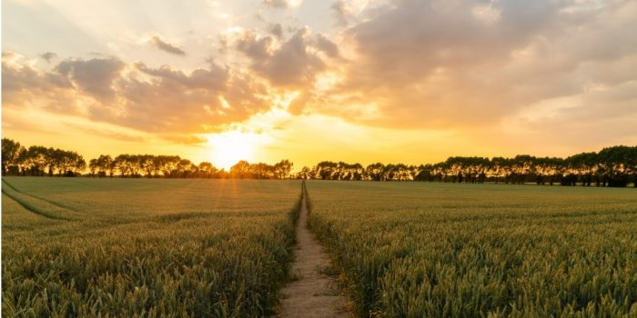 understanding personality disorders sun setting on path in field